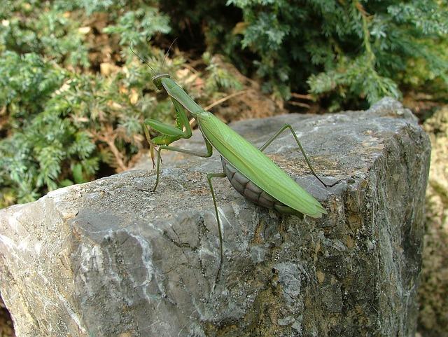 Defensa y depredación de los escarabajos » ESCARABAJOPEDIA