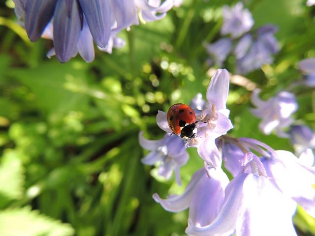 Escarabajos como recursos beneficiosos » ESCARABAJOPEDIA