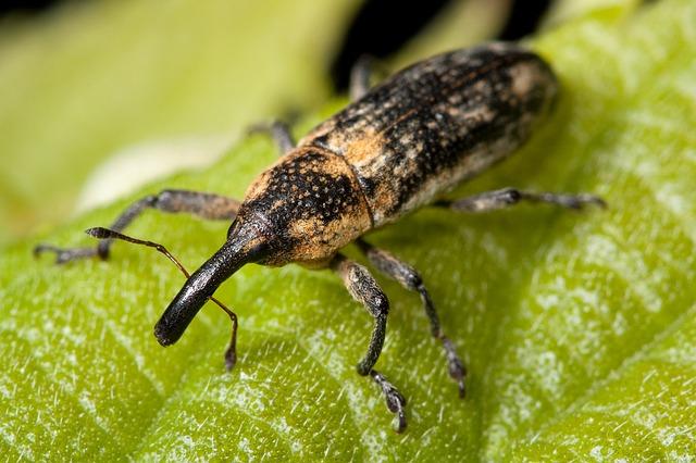 Anatomía de los escarabajos » ESCARABAJOPEDIA