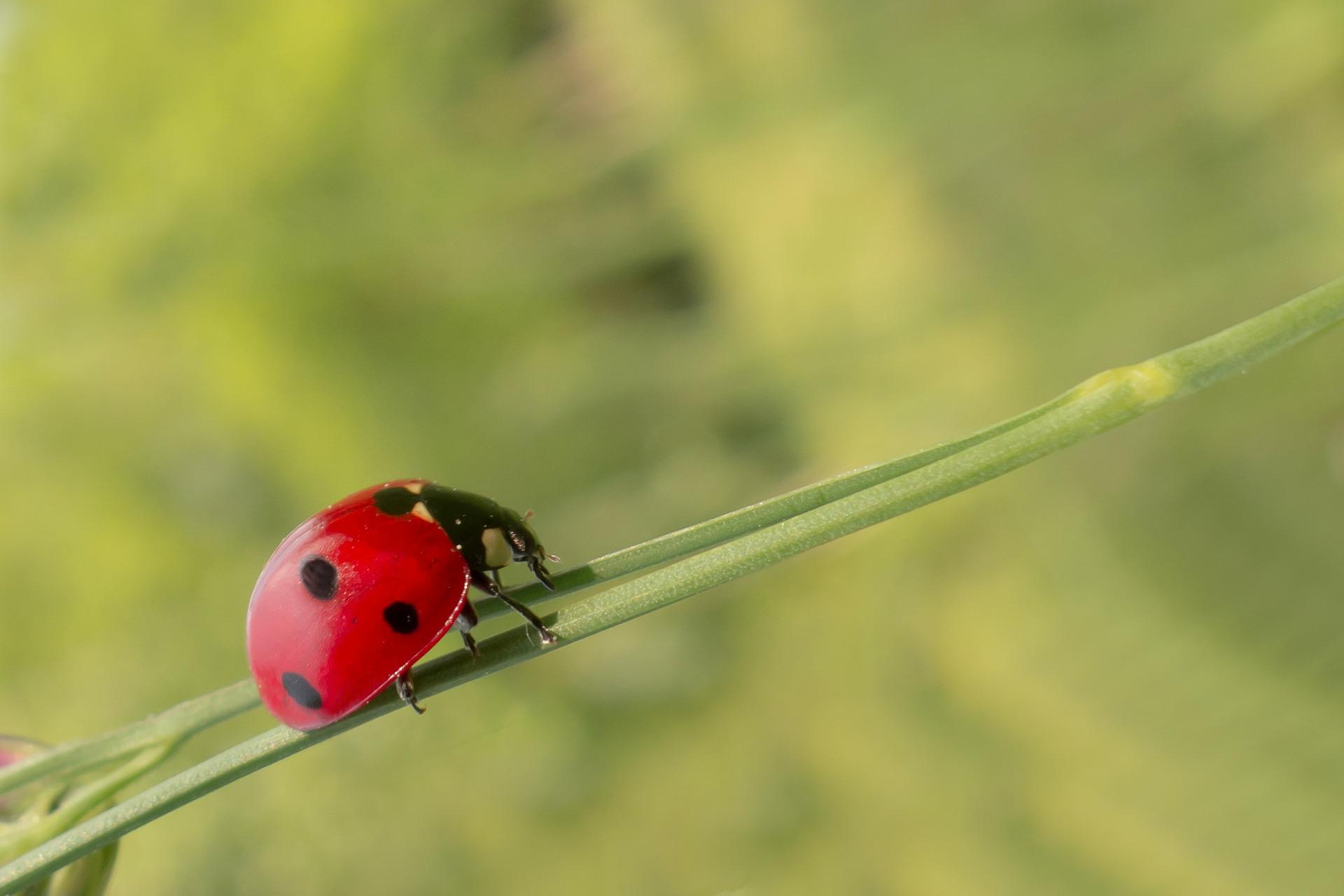 ESCARABAJOPEDIA » Escarabajos. Enciclopedia Ilustrada